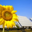 Beautiful sunflower and solar panel and power plant.Alternative energy conc